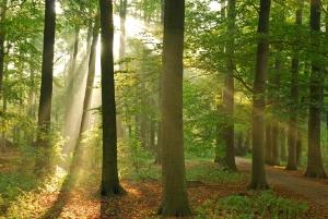 Die StVO regelt die Vorfahrt auch auf Waldwegen.